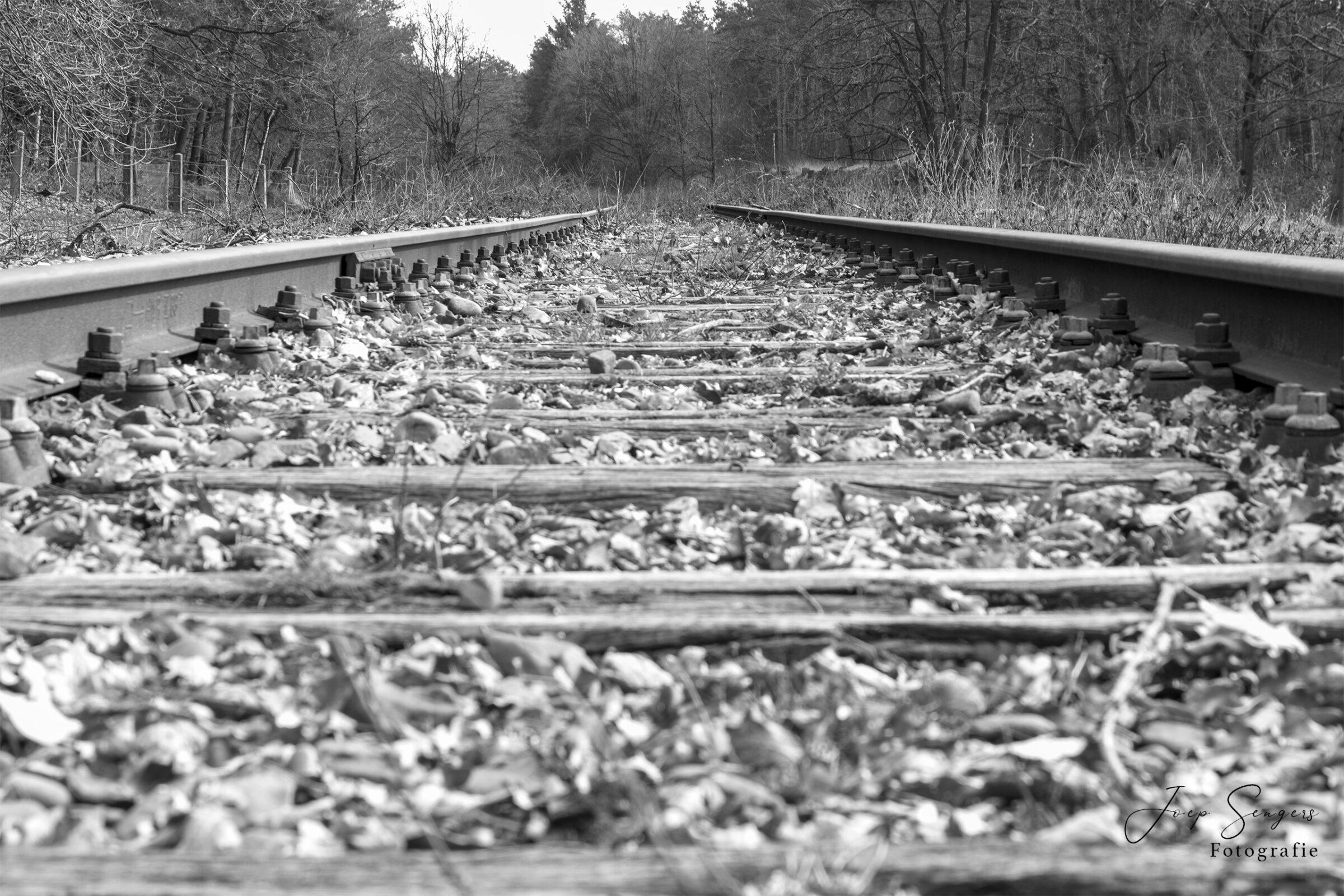 Spoor in Nationaal park de Meinweg